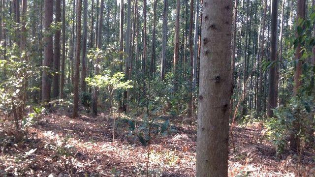 Sítio em Santo Antônio da Patrulha 10 Hectares. Peça o Vídeo Aéreo - Foto 9