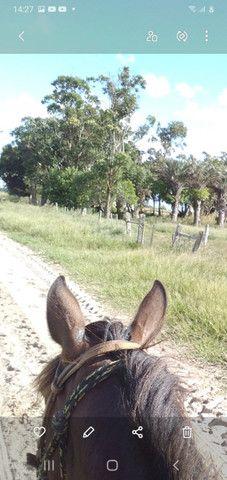 Venda permanente cavalos - Foto 2
