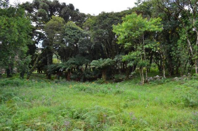 Terreno à venda, 5000 m² por r$ 3.500.000,00 - vila suica - canela/rs - Foto 10