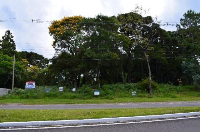 Terreno à venda, 5000 m² por r$ 3.500.000,00 - vila suica - canela/rs - Foto 13