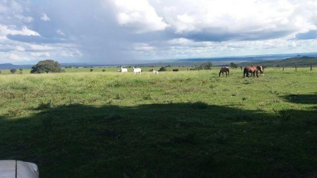 Fazenda 157 alqueires caiapona