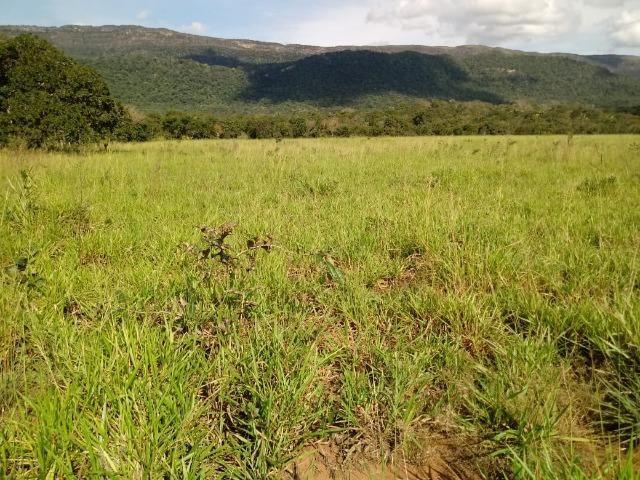 Fazenda de 785 hectares em Rosário Oeste MT - Foto 7