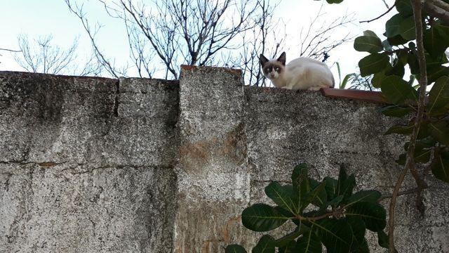 Doação gatinha - Foto 2
