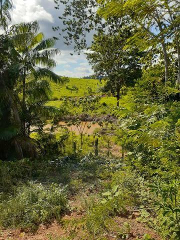 Venda fazenda 20 alqueires localizada 5 km da vila Paulo fonteles - Foto 8