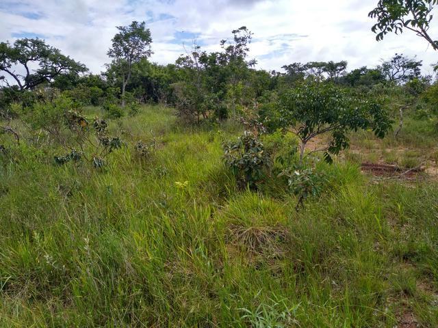 Sítio com 38 hectares as margens do Ribeirao Ze Pedro! - Foto 3