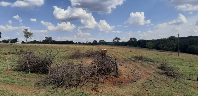 Fazenda 38 Alqueires em Bela Vista - Foto 2