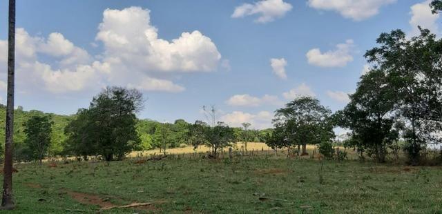 Fazenda 38 Alqueires em Bela Vista - Foto 5