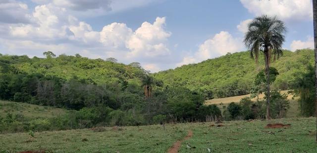 Fazenda 38 Alqueires em Bela Vista - Foto 10