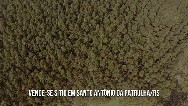 Sítio em Santo Antônio da Patrulha 10 Hectares. Peça o Vídeo Aéreo - Foto 2