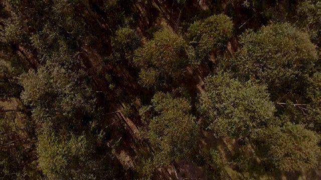 Sítio em Santo Antônio da Patrulha 10 Hectares. Peça o Vídeo Aéreo - Foto 6