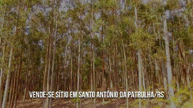 Sítio em Santo Antônio da Patrulha 10 Hectares. Peça o Vídeo Aéreo - Foto 8