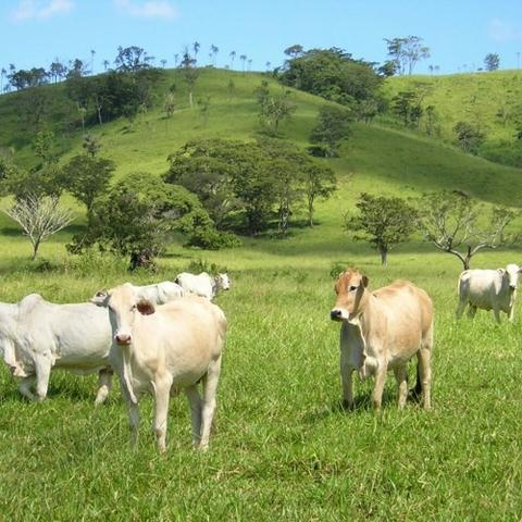 Fazenda 500 Alqueires Morrinhos 176 km Goiania até a porteira da fazenda