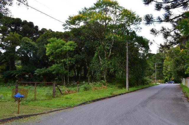 Terreno à venda, 5000 m² por r$ 3.500.000,00 - vila suica - canela/rs - Foto 11