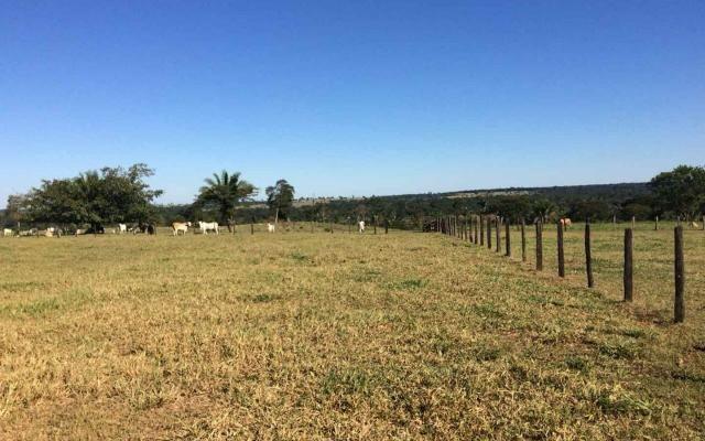 Fazenda em Nova Olímpia MT 550 hectares