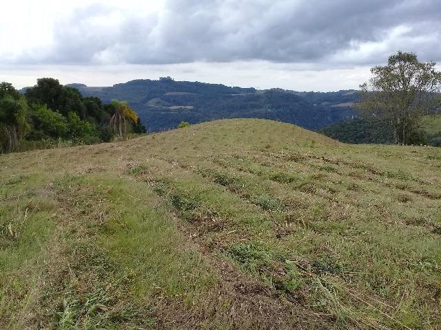 Área de terrras em Cotiporã com 15,9 hectares - Foto 2