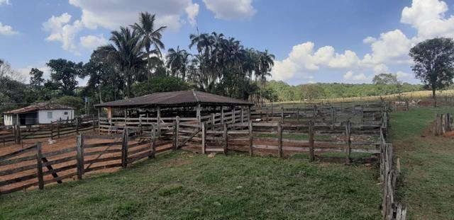 Fazenda 38 Alqueires em Bela Vista - Foto 6