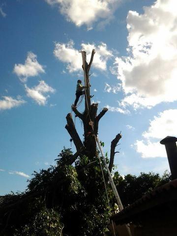 Corte de árvores em geral (remoção de alto risco), remoção de abelhas - JRK Prestação de S - Foto 4