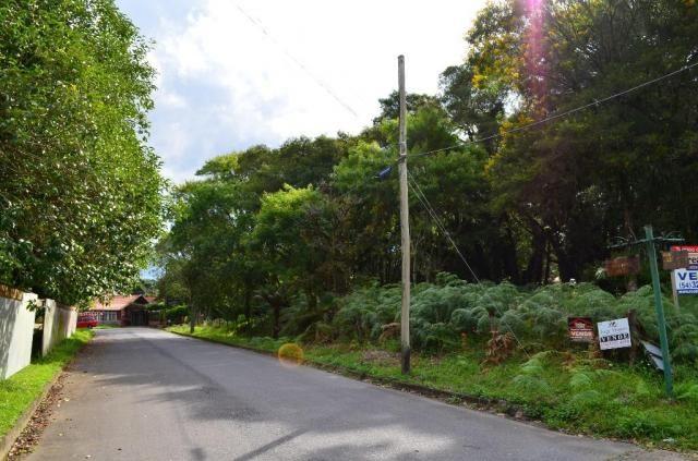 Terreno à venda, 5000 m² por r$ 3.500.000,00 - vila suica - canela/rs - Foto 6