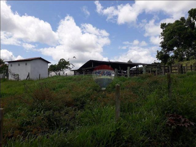 Fazenda à venda em Porto Seguro (Vera Cruz), Bahia - Foto 4