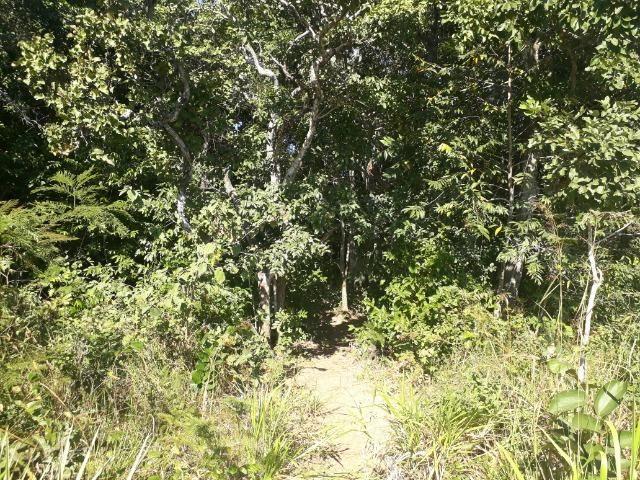 Fazenda de 785 hectares em Rosário Oeste MT - Foto 20