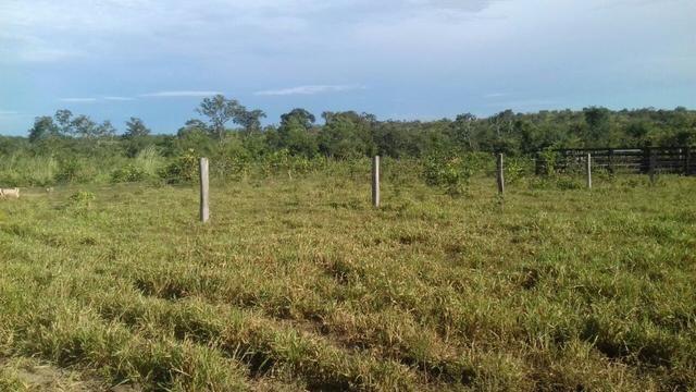 Vendo Sitio / Chácara 72 hectares, Pecuária ou lavoura, Casa, energia, Agua, Nobres - Foto 3