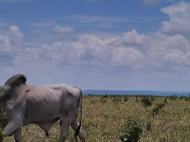 Fazenda em paranatinga - Foto 7