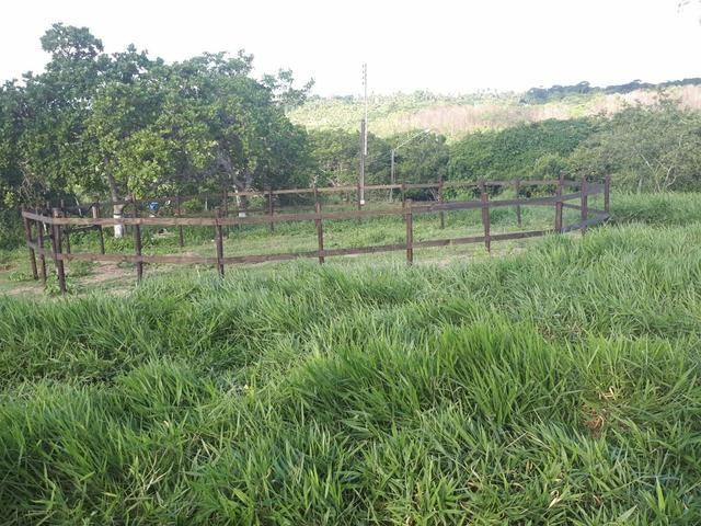 Sítio com 11.67 hectares em Igarassu/PE - Foto 15