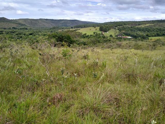 Sítio com 38 hectares as margens do Ribeirao Ze Pedro! - Foto 2