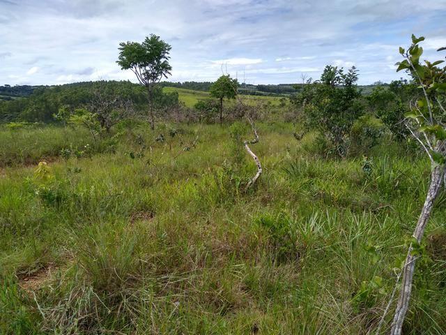Sítio com 38 hectares as margens do Ribeirao Ze Pedro! - Foto 5