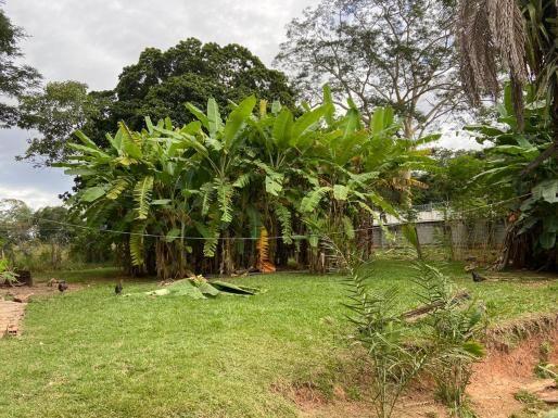 Área com 42350 m² no Parque Industrial Joao Bras em Goiânia - Foto 11