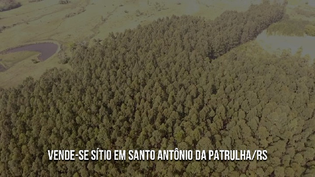 Sítio em Santo Antônio da Patrulha 10 Hectares. Peça o Vídeo Aéreo - Foto 4