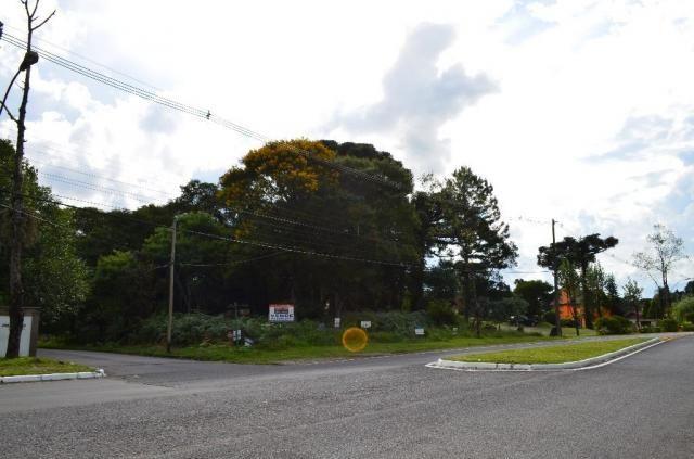 Terreno à venda, 5000 m² por r$ 3.500.000,00 - vila suica - canela/rs - Foto 3