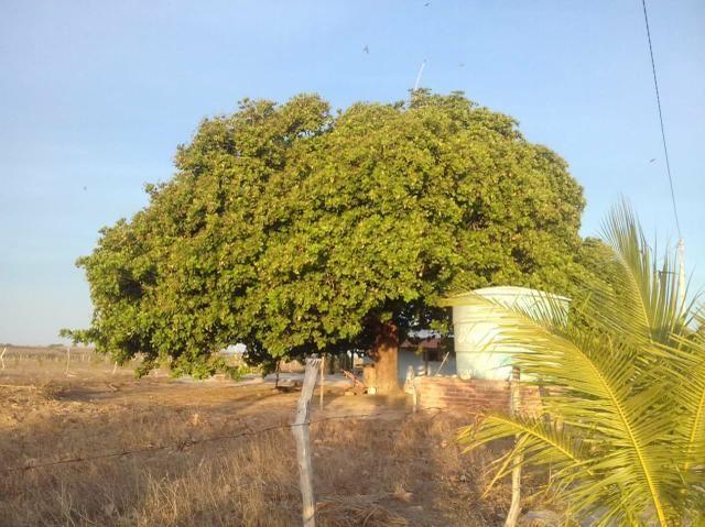 Vendo linda chácara a 8 km de tangara - Foto 2