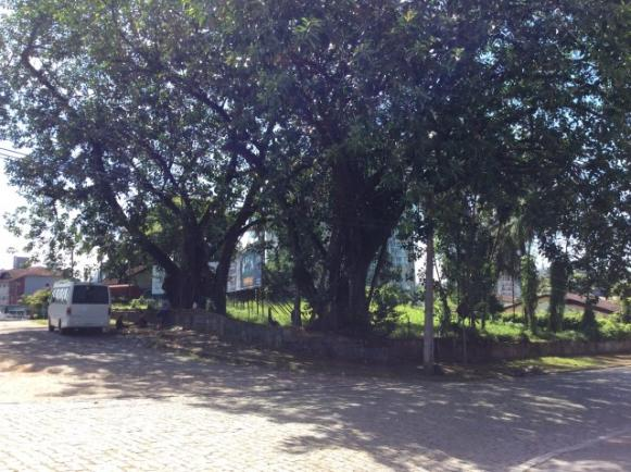 Terreno para alugar em Anita garibaldi, Joinville cod:04301.004 - Foto 4