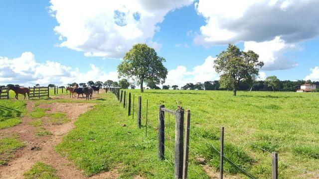 Ótima fazenda colado no Gama, a 27km - Foto 7