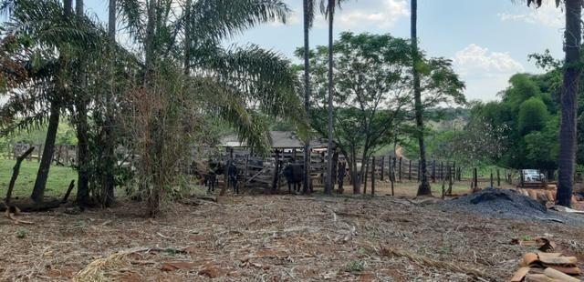 Fazenda 38 Alqueires em Bela Vista - Foto 11