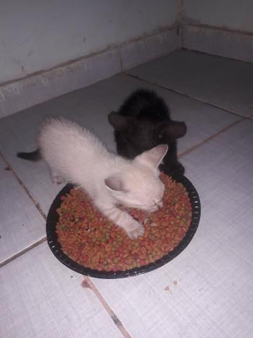 Doação de 4 filhotes - Foto 2