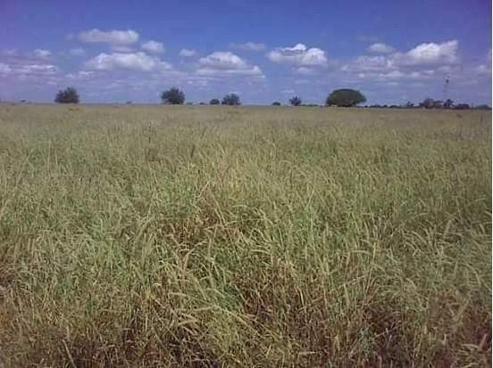Fazenda à venda, 18400000 m² por R$ 8.000.000,00 - Zona Rural - Pilão Arcado/BA - Foto 3