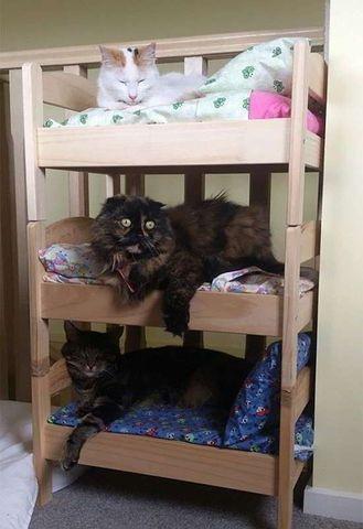 Lindas e Baratas Caminhas e Casinhas Personalizadas p/Gatos - Foto 4