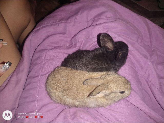 Vendo ou troco filhotes de coelhos por algo do meu interesse