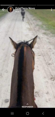 Venda permanente cavalos - Foto 5