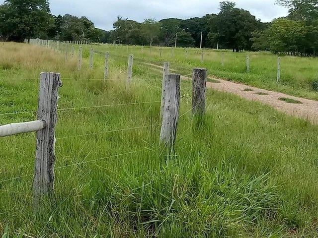 Fazenda/Sítio/Chácara para venda com 3500 metros quadrados com 3 quartos - Foto 2