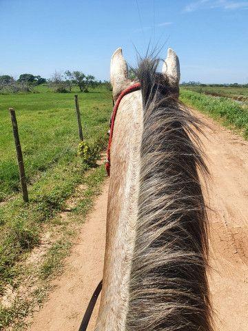 Vendo Cavalo 7/8 QM - Foto 2