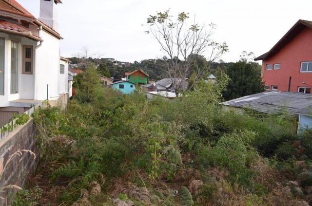 Terreno residencial à venda, são josé, canela. - Foto 4
