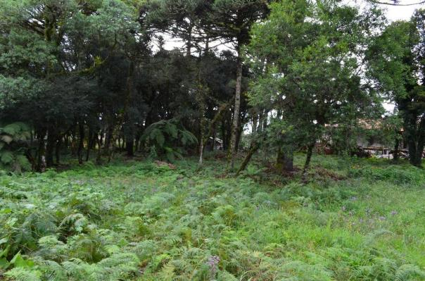Terreno à venda, 5000 m² por r$ 3.500.000,00 - vila suica - canela/rs - Foto 9