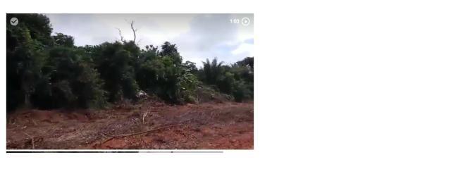 1100 Hectares, cerrado e mata, argilosa, vizinhos Soja, Região, Juína,Brasnorte-MT,Ocasião