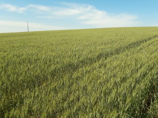 Fazenda 55 alq pitanga Pr