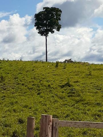 Venda fazenda 20 alqueires localizada 5 km da vila Paulo fonteles - Foto 4