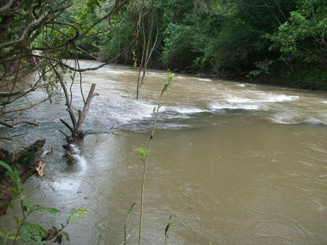 VENDO SÍTIO 22,6 Alq. próximo de Itapirapuã e Águas de São João- Goiás R$2Milhões - Foto 10