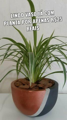 Lindos vasos de plantas!! - Foto 5